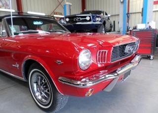 Mustang 66